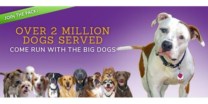 Central Bark Doggy Day Care slide 1