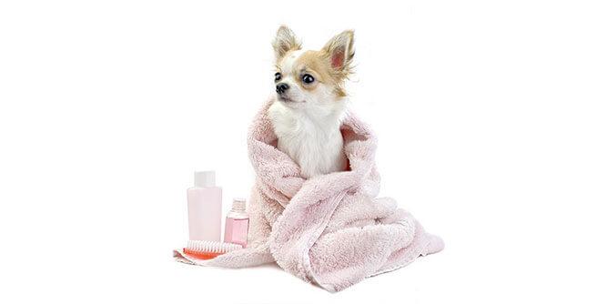 Furry Land - Mobile Pet Grooming slide 2