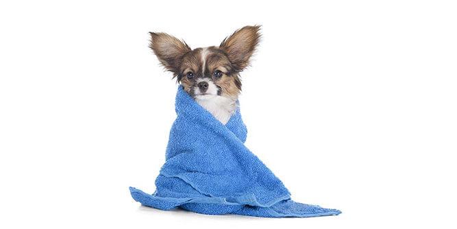 Furry Land - Mobile Pet Grooming slide 4