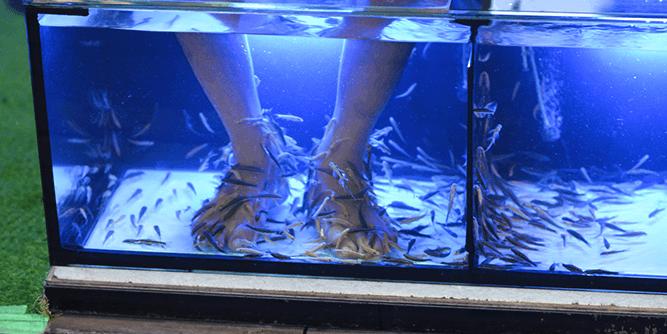 Garra Spas - Fish Spa Experience slide 4