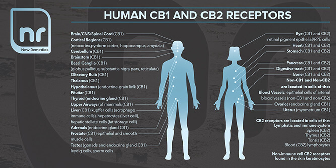 New Remedies CBD slide 6