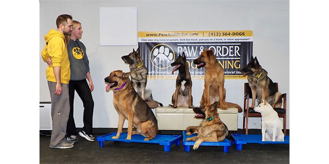 Paw & Order - Dog Training slide 8