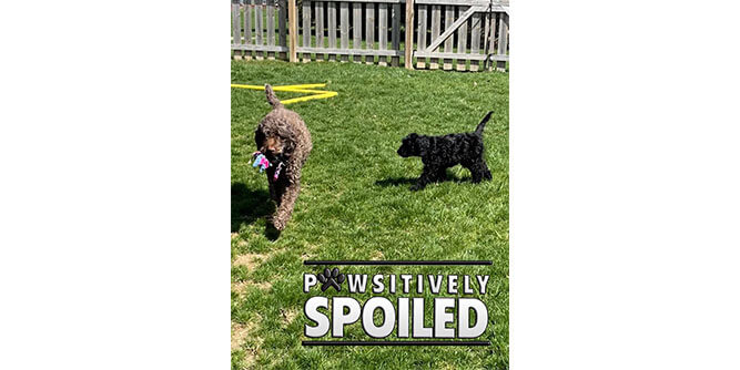 Pawsitively Spoiled Pet Sitting slide 3