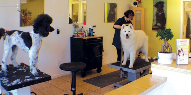 Sydnee's Pet Grooming slide 1