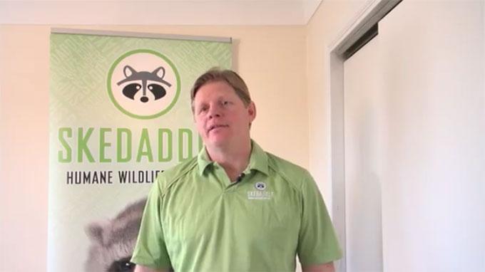 Skedaddle Humane Wildlife Control - Andrew Wheelock