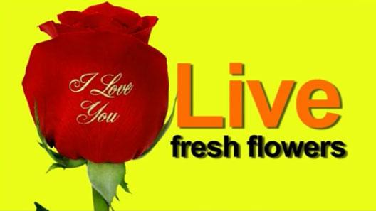 Florist Franchise - Speaking Roses